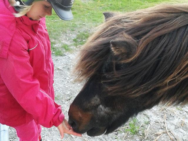 pony_5